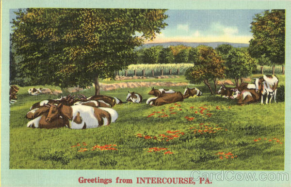 Greetings From Intercourse Pennsylvania