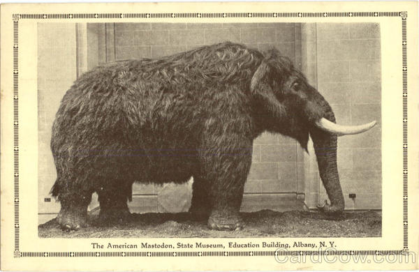 The American Mastodon, State museum Albany New York