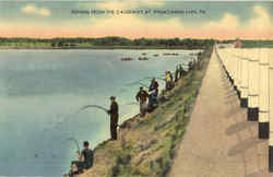 Fishing From The Causeway Postcard