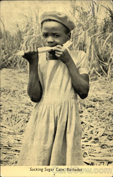 Girl Sucking Sugar Cane Barbados Caribbean Islands