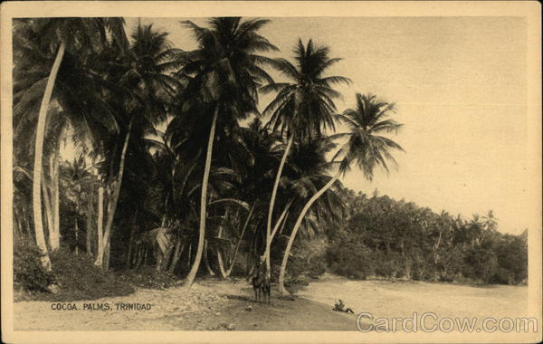 Cocoa Palms Port of Spain Trinidad Caribbean Islands