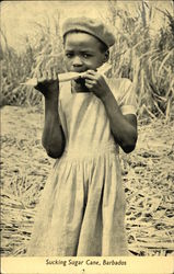 Girl Sucking Sugar Cane