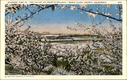 "Blossom Time in ""The Valley of Heart's Delight"", Santa Clara County"