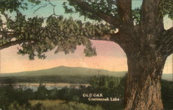 Monadnock Mountain from the Old Oak, Contoocook Lake