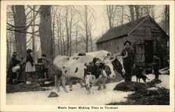 Maple Sugar Making Time Postcard
