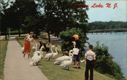 Feeding the Swans at the Lake