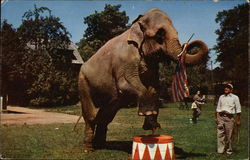Betsy the Elephant, Benson Wild Animal Farm