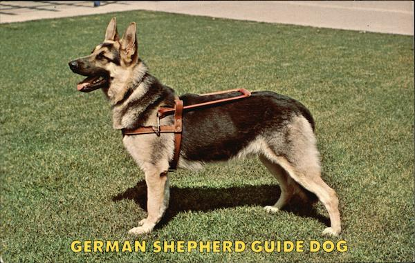 German Shepherd Guide Dog Dogs