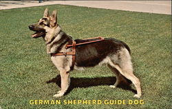German Shepherd Guide Dog