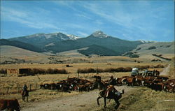 Cattle Roundup Near the Tobacco Root Mountains