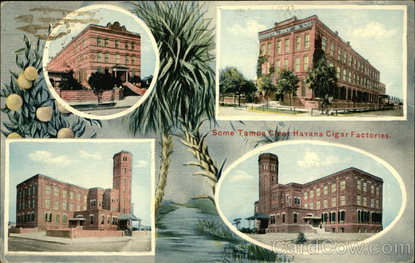 Some Tamos Clear Havana Cigar Factories Cuba