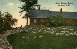 Sheep at the Glessner Estate