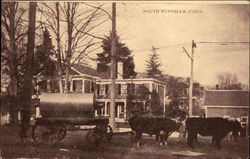 Cows Pulling Wagon