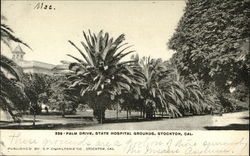 Palm Drive, State Hospital Grounds