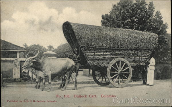 Bullock Cart Colombo Sri Lanka Southeast Asia
