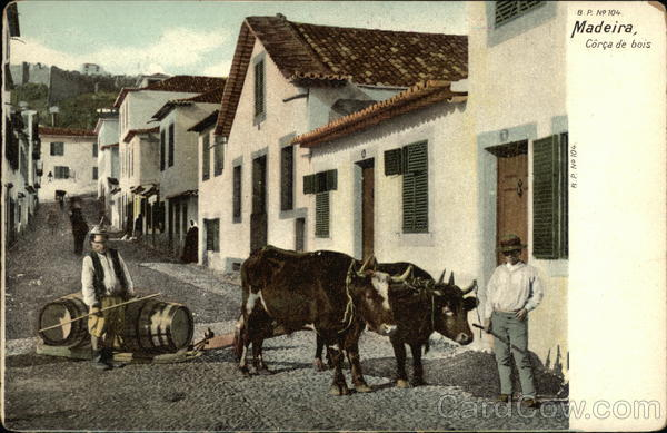 Madeira, Corca de bois. Two men, two cows on a city street Portugal
