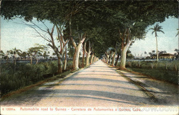 Tree-Lined Automobile Road to Guines Cuba