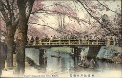 Cherry Blossoms at Edo River