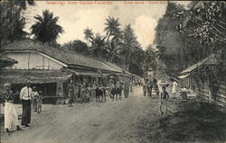 Street Scene at Colombo's Grand Pass