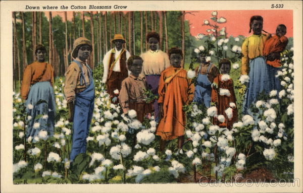 Down Where The Cotton Blossoms Grow Black Americana