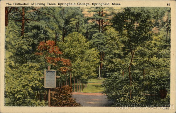 Springfield College - The Cathedral of Living Trees Massachusetts