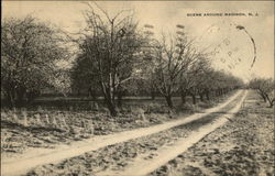 Dirt Road passing through Orchard