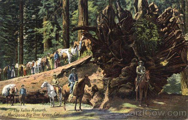The Fallen Monarch Big Trees California