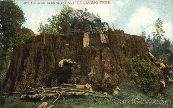 Automobile On Stump Of California Big Tree Big Trees