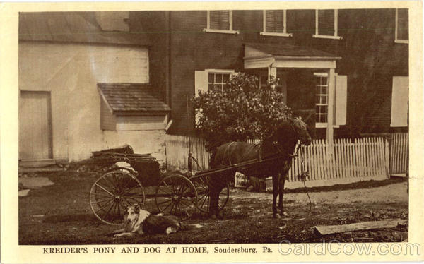 Kreider's Pony And Dog At Home Soudersburg Pennsylvania