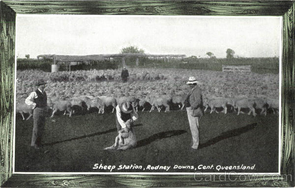 Panama Pacific Sheep Station Queensland 1915 Panama-Pacific Exposition
