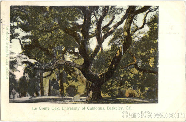 Le Conte Oak Berkeley California