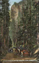 A Road Scene In Rainer National Park