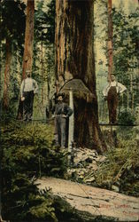 Large Timber, Oregon