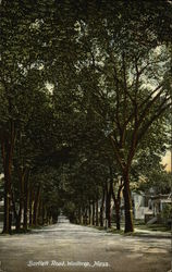 Tree Lined View of Bartlett Road