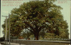 The Old Oak Postcard