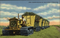 Caterpillar Field Transportation in the Florida Everglades