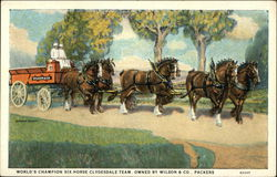 World's Champion Six-Horse Clydesdale Team - Owned by Wilson & Co. Packers