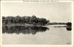 Shoreline and Cottages on Tully Lake