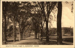 Tree Lined View of South Road, MSC