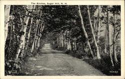The Birches - Scenic Lane