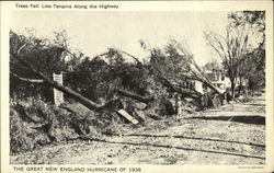 The Great New England Hurricane of 1938-Trees Fell Like Tenpins