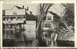 The Great New England Hurricane of 1938-Fallen Trees and Flood