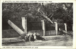Trees Uprooted - Great New England Hurricane 1938 Postcard