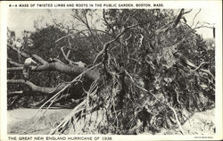 A Mass of Twisted Limbs and Roots in the Public Garden