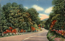 Greetings - Scenic Tree Lined Road