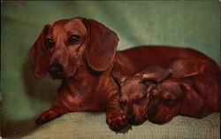 Dachshund with 2 Puppies