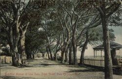 Beautiful Avenue of Live Oaks, Front Street