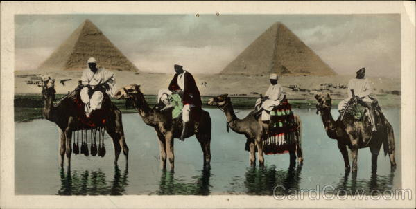 Camels and the Pyramids Cairo Egypt Africa