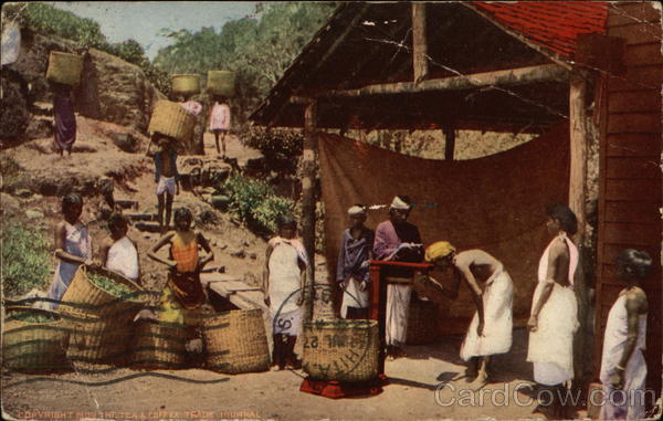 Tea Culture Around The World Ceylon Southeast Asia