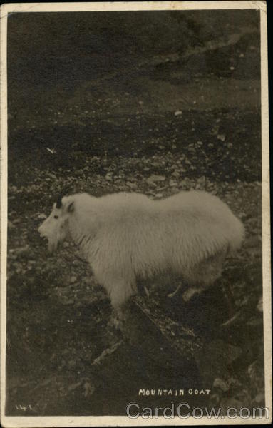Mountain Goat George Noble